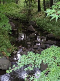 小川に楓の葉が差し掛かるこの一角は、私の一番のお気に入りです。