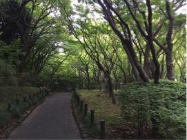 木々に囲まれたこの小道を進み、少し小高い坂を登ると突き当りが工芸館です。